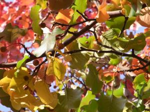 秋の色27
