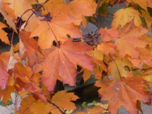 秋の色28