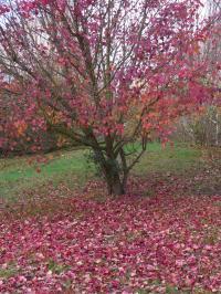 秋の色24