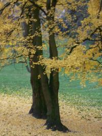 秋の色25