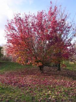 秋深し 2-13