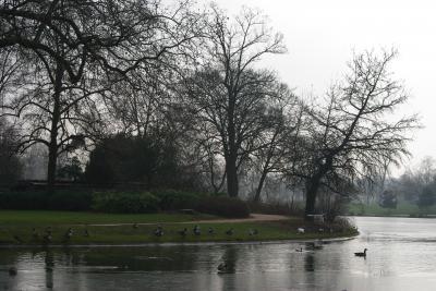 Bois de Vincenne 2