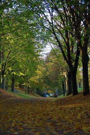 秋の深まり2