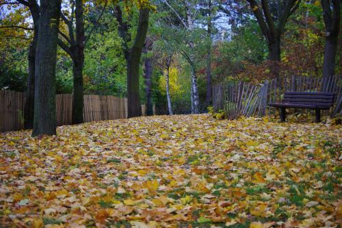 秋の深まり3