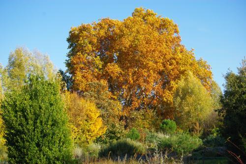 秋の深まり6