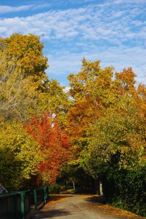 秋の深まり7