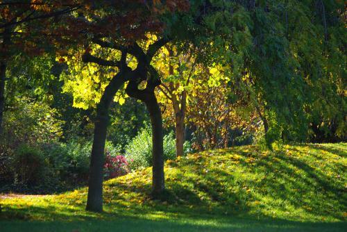秋の深まり8