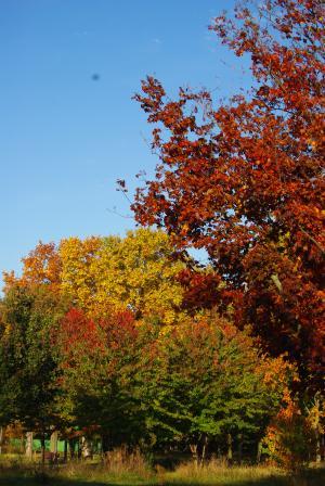 秋の深まり9