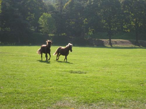 解放された馬