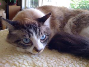 cat011.jpg