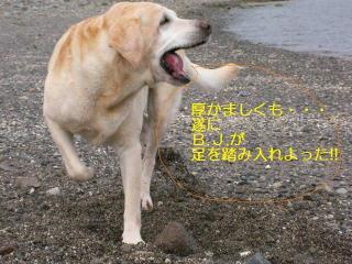 SANY0308_20090929153715.jpg