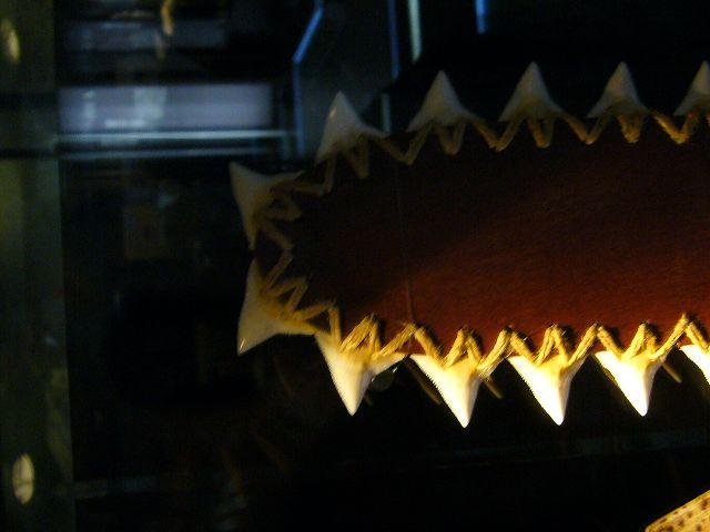 s-歯剣先