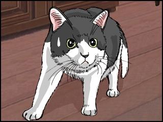 023猫びびる