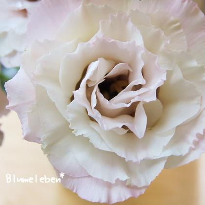 トルコキキョウも薄い花びらがフリフリ