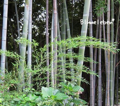 花屋さんで売ってる普通サイズはこのくらいの竹