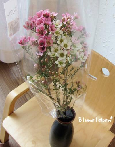 ワックスフラワーってこんな花