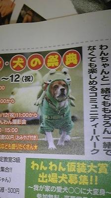 dogdogdog.jpg