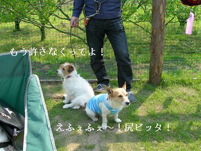 シン&アリーお尻2