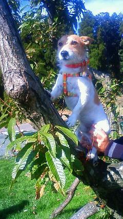 木登りシン