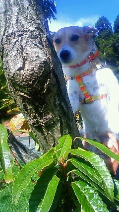 木登りシン1