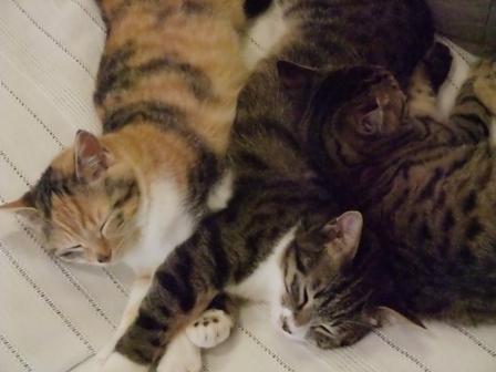 久美子さんちの猫