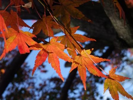 2011京都紅葉1