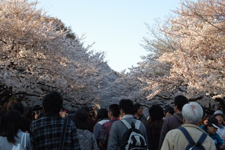 sakura2011_4.jpg