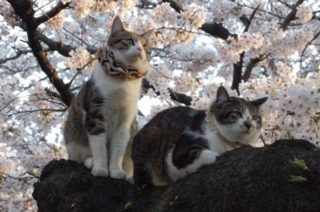 sakura2011_5.jpg