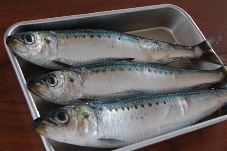 sardine2011.jpg
