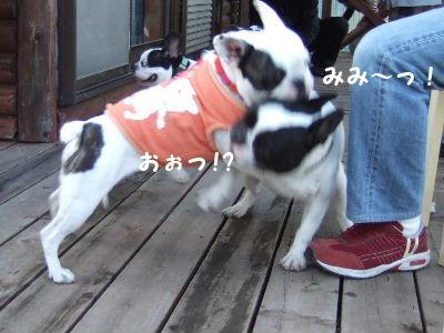 2008_1123近江八幡とonedaycafe0134