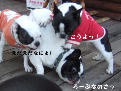 2008_1123近江八幡とonedaycafe0135
