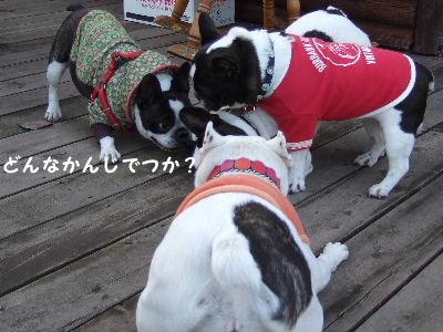 2008_1123近江八幡とonedaycafe0138
