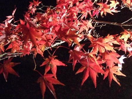 2008_1123近江八幡とonedaycafe0153
