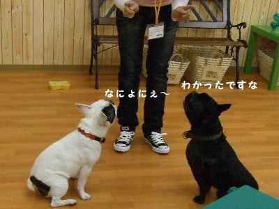 2008_1123近江八幡とonedaycafe0190