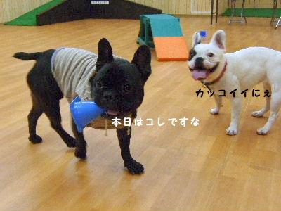 2008_1123近江八幡とonedaycafe0170