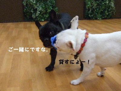 2008_1123近江八幡とonedaycafe0178