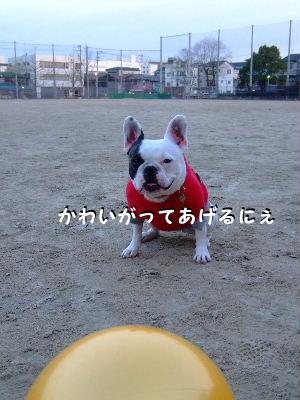 NEWぼーる 001