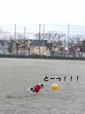 NEWぼーる 002