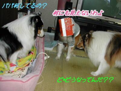 baba2_20091216020921.jpg