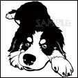 成犬バニスタンプサンプル