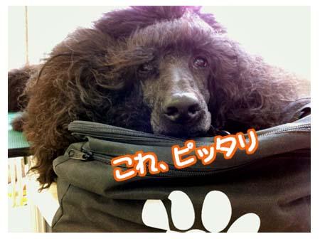 bisky_05.jpg