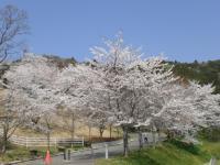 2011_0414_104708-CIMG1781.jpg