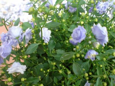 2011_0523_093042-CIMG1918.jpg