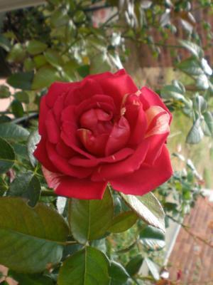 2011_0930_075943-CIMG2233.jpg