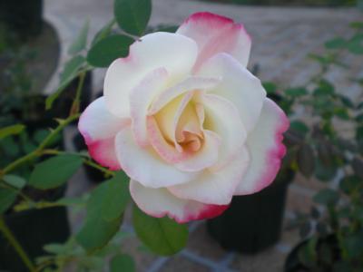 2011_1016_141810-CIMG2416.jpg