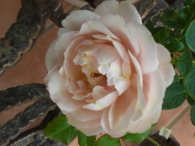 2011_1020_095032-CIMG2440.jpg