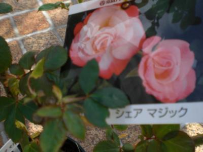 2011_1107_103726-CIMG2590.jpg