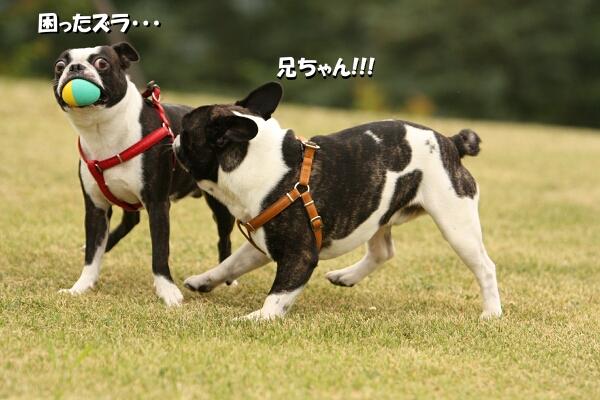 走れ~~~~