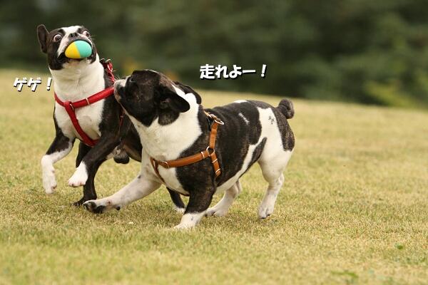 走る~~~