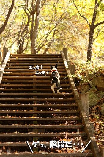 また、階段だ・・